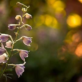 Bonnie Bruno - Lavender Delphinium