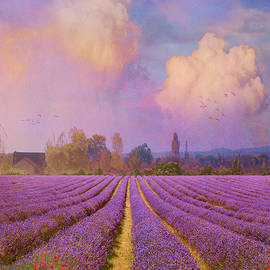 R christopher Vest - lavender fields provence
