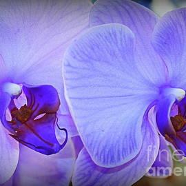 Dora Sofia Caputo Photographic Design and Fine Art - Lavender Rhapsody - Orchids