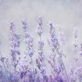 Claudia Moeckel - Lavender Romance