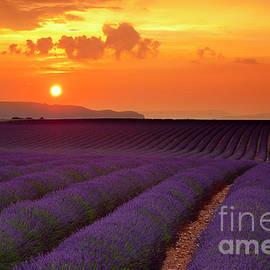 Lavender Sunset by Brian Jannsen