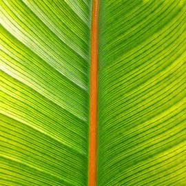 Leaf Art 793ss by Steve Lipson
