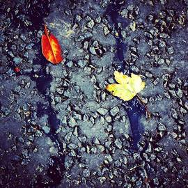Leaves in the Wet Colour