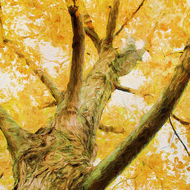 Leaves of Yellow by Darren Fisher