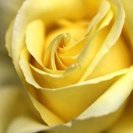 Lemon Lush by Joy Watson