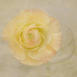Lemon Pastels by Kim Hojnacki