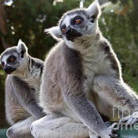 Nadya Ost - Lemurs