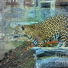 Marcia Lee Jones - Leopard Charge