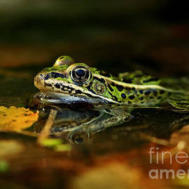 Inspired Nature Photography Fine Art Photography - Leopard Frog Floating on Autumn Leaves