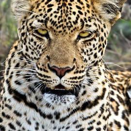 Liz Leyden - Wild Leopard in Botswana