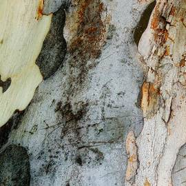 Denise Clark - Leopard Tree Bark Abstract 5