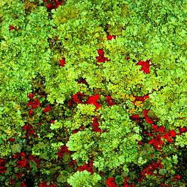 Bob Beardsley - Lichen