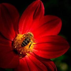 Light and honey by Cristina-Velina Ion