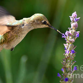 Light Filters Behind the Hummer by Debby Pueschel