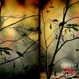 Aimelle - Light Through Shadow