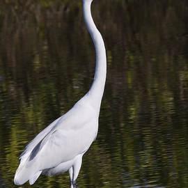 John M Bailey - Like a Great Egret Monument