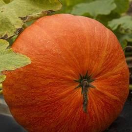 Darleen Stry - Lil Pumpkin