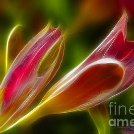 Gary Gingrich Galleries - Lilies-6062-Fractal