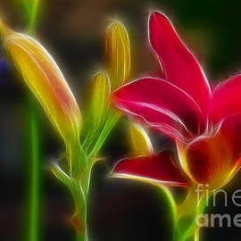 Lilies-6340-Fractal by Gary Gingrich Galleries