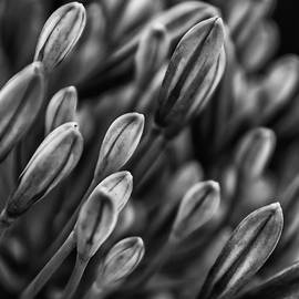 G-Ten Photography - Lilly Buds