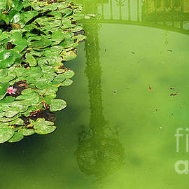 Lilly Pad by C Lythgo