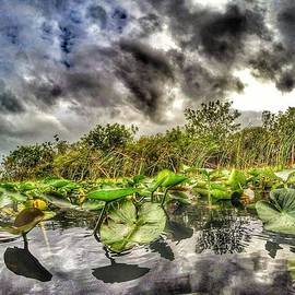 Lilly Pads in the Glades