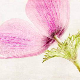 Linen in Pink by Caitlyn  Grasso