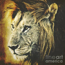 Angela Doelling AD DESIGN Photo and PhotoArt - Lion