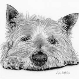 Little Dog by Sarah Batalka