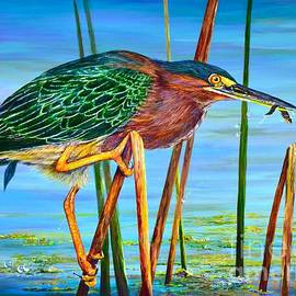 Little Green Heron by AnnaJo Vahle