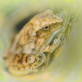 Little Peeper by Sue Capuano