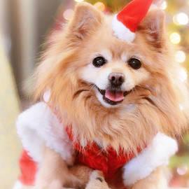 Charline Xia - Little Santa Claus