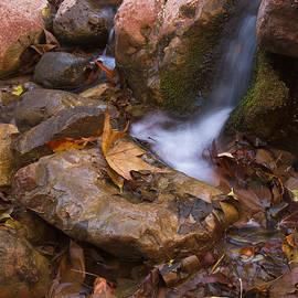 Little stream by Bryan Keil