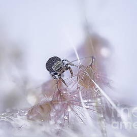 Little Thirsty Spider by Michelle Meenawong