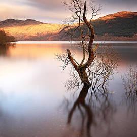 Grant Glendinning - Loch Lomond Tree