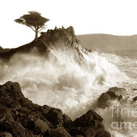 California Views Mr Pat Hathaway Archives - Lone Cypress tree on  Midway Point Pebble Beach California circa 1916