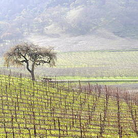 Lone Tree In The Vineyard by AJ  Schibig