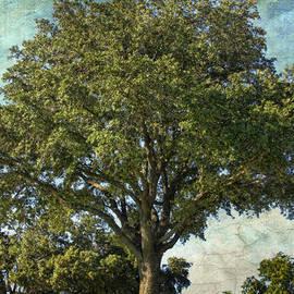 Joan Bertucci - Lone Tree