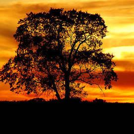 Mary Carol Story - Lone Tree