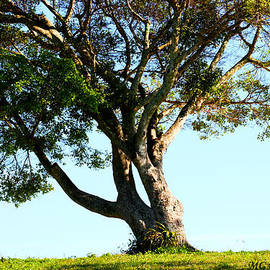 The Lone Tree Original by Marty Gayler