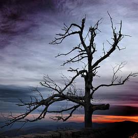 Renee Sullivan - Lone Tree
