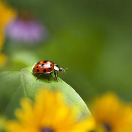Lonely Ladybug by Christina Rollo