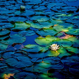 Lonesome Lily by Jim DeLillo