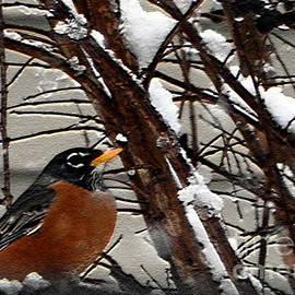 Lydia Holly - Looking at Robin Through A Winter