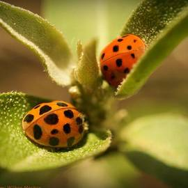 Ami Mosher - Lord and Lady Bug