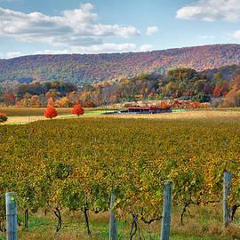 Steven Ainsworth - Loudon County Vineyard II