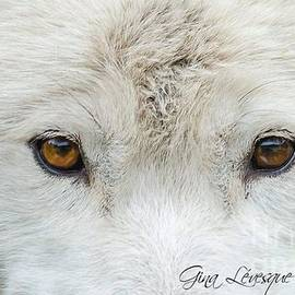 Gina Levesque - Arctic wolf