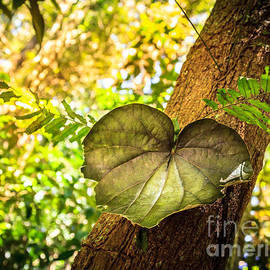 Silken Photography - Love Leaf