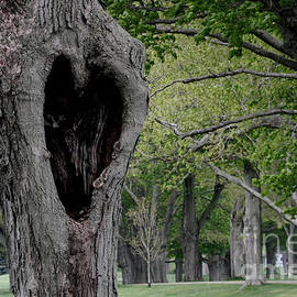 Jayne Carney - Love Tree