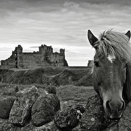 RicardMN Photography - Lovely horse and Tantallon Castle
